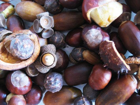 Zmyslová nádoba žalude gaštany jesenné plody z lesa tvorenie